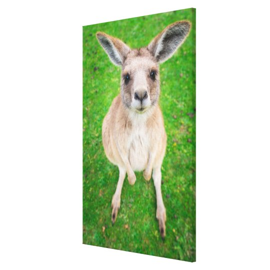 Getty Images | Baby Kangaroo Canvas Print