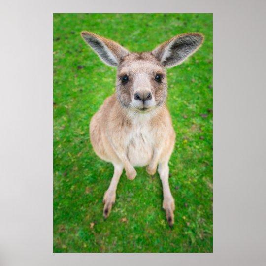 Getty Images | Baby Kangaroo Poster