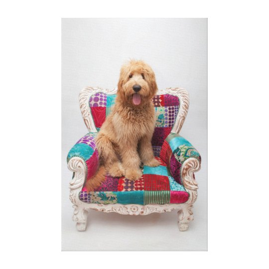 Getty Images   Cute Goldendoodle Canvas Print