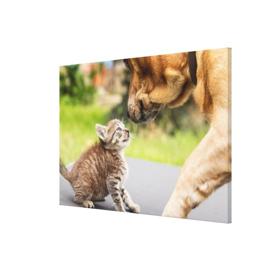 Getty Images | Dog & Cat In Love Canvas Print