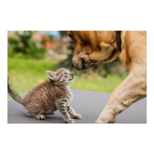 Getty Images | Dog & Cat In Love Poster