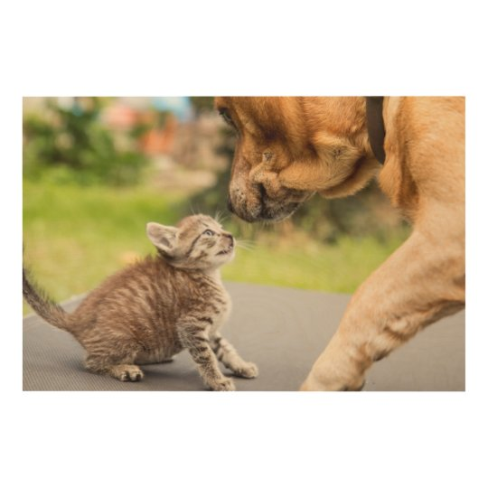 Getty Images | Dog & Cat In Love Wood Print