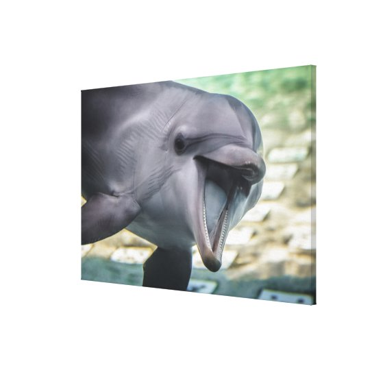 Getty Images | Dolphin Canvas Print