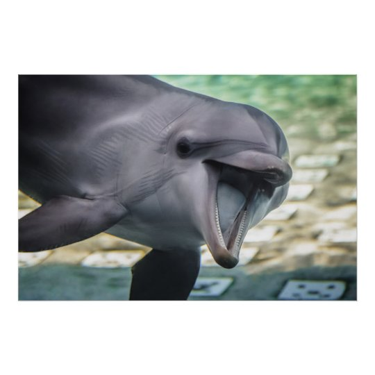 Getty Images | Dolphin Poster