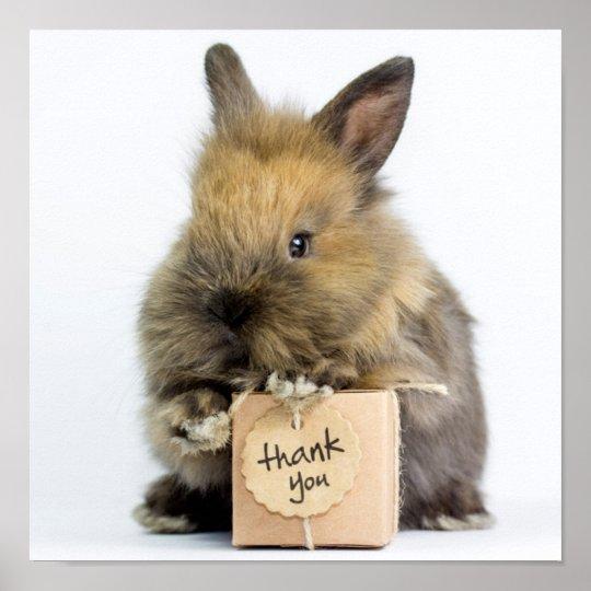 Getty Images | Dwarf Rabbit Poster