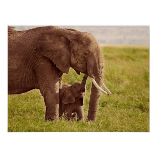 Getty Images | Elephant & Baby Poster