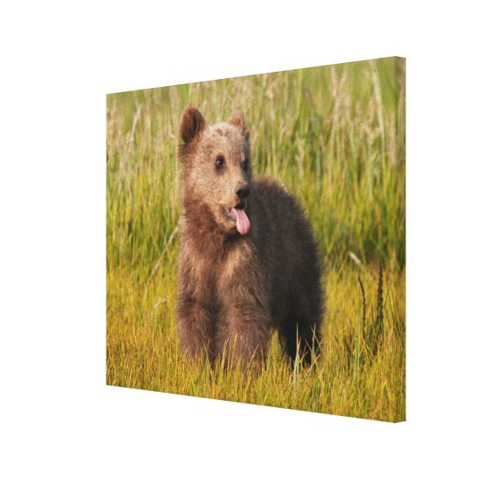 Getty Images | Funny Baby Bear Canvas Print