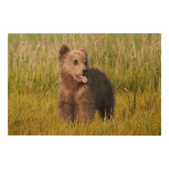 Getty Images   Funny Baby Bear Wood Wall Decor
