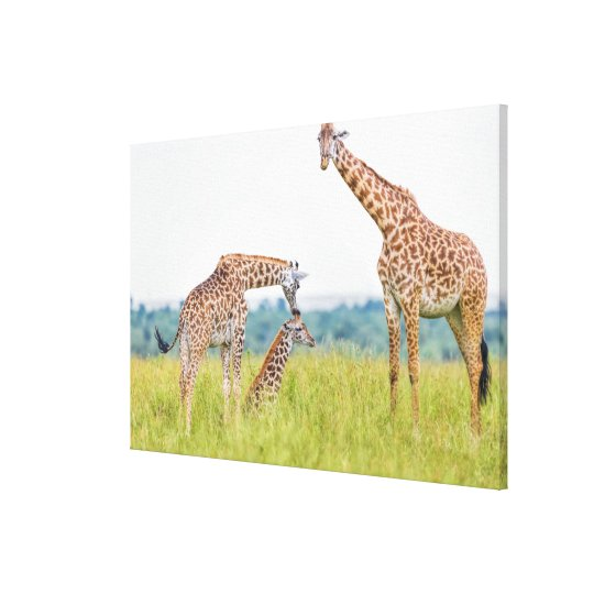 Getty Images | Giraffe Family Canvas Print