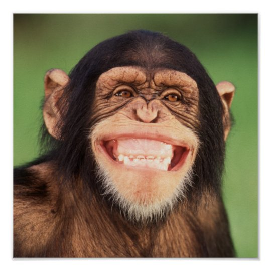 Getty Images | Grinning Chimpanzee Poster