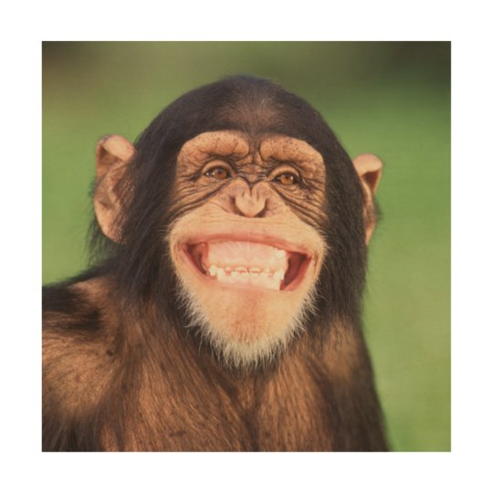 Getty Images | Grinning Chimpanzee Wood Print