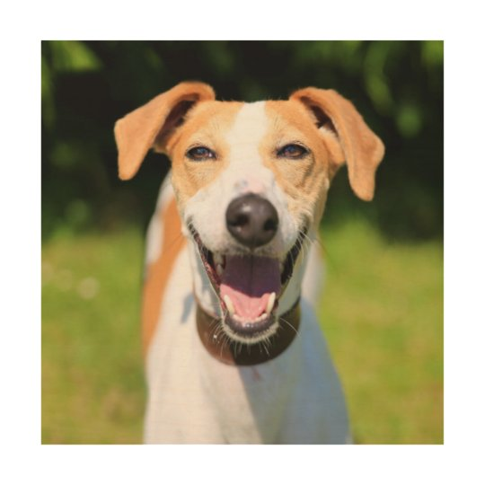 Getty Images   Laughing Dog Wood Wall Art