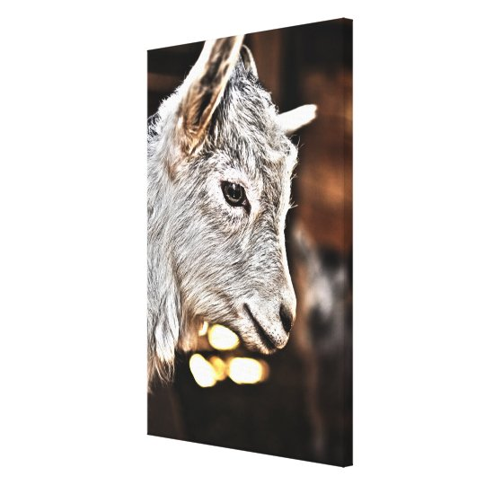Getty Images | Little Goat Canvas Print