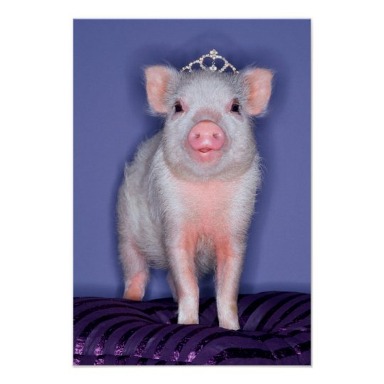 Getty Images | Prize Piglet Poster