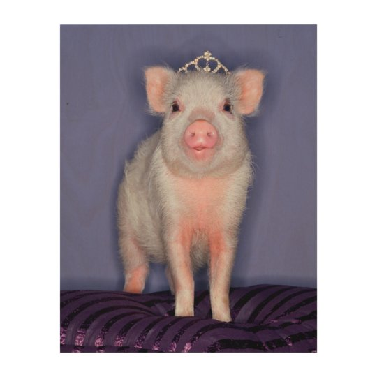 Getty Images | Prize Piglet Wood Print