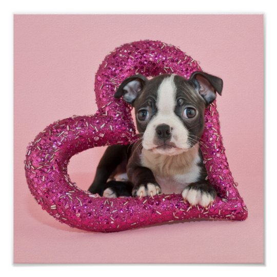 Getty Images | Puppy Love Poster