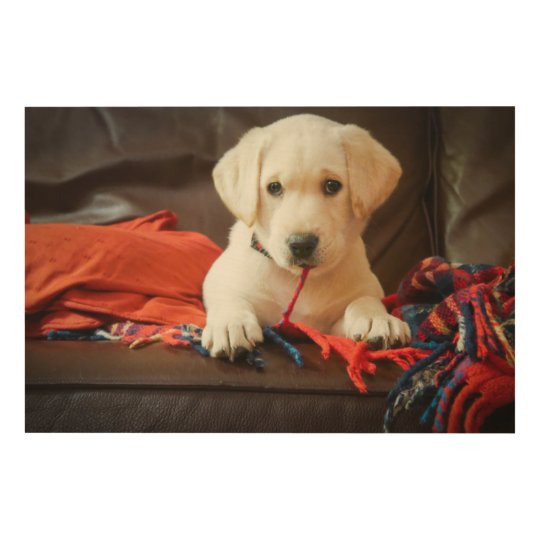 Getty Images | Puppy On A Sofa Wood Wall Decor