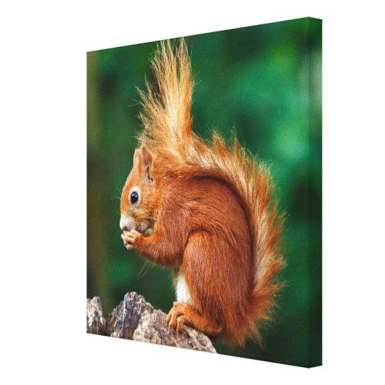 Getty Images | Red Squirrel Canvas Print