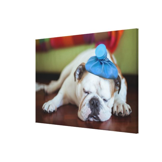 Getty Images | Sick Young Puppy Canvas Print