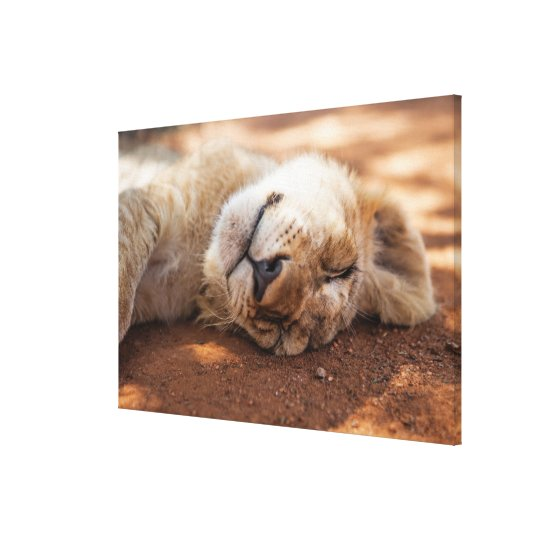 Getty Images | Sleeping Lion Cub Canvas Print