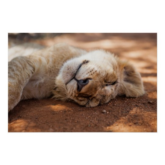 Getty Images | Sleeping Lion Cub Poster