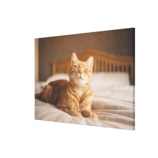 Getty Images   Sleepy Cat Canvas Print