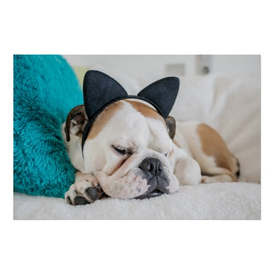 Getty Images | Sleepy Dog with Cat Headband Poster