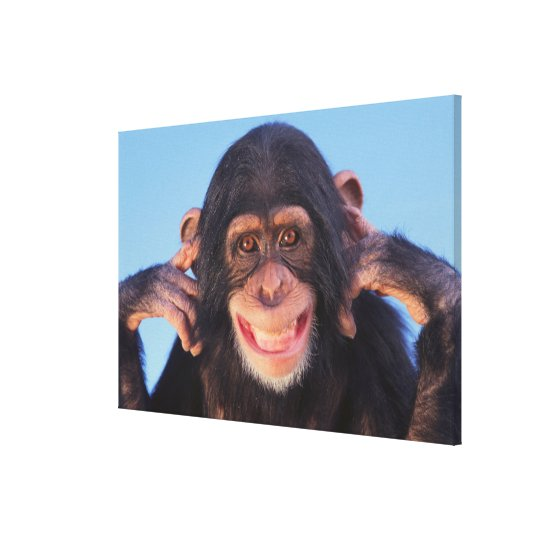Getty Images | Smiling Chimpanzee Canvas Print
