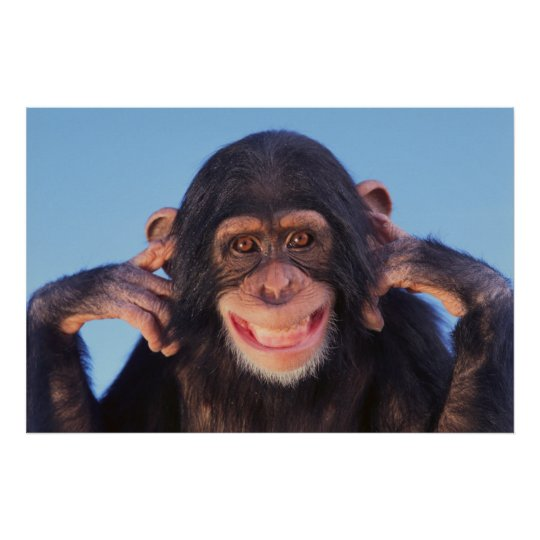 Getty Images   Smiling Chimpanzee Poster