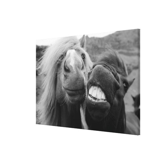 Getty Images | Smiling Horses Canvas Print