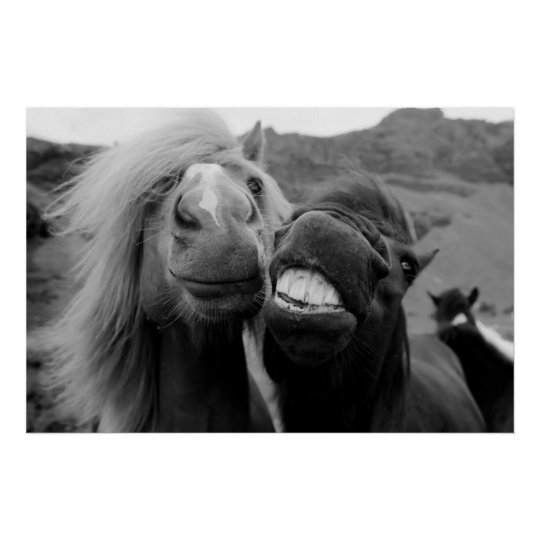 Getty Images   Smiling Horses Poster