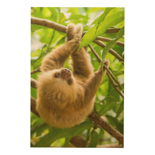 Getty Images | Upside Down Sloth Wood Print