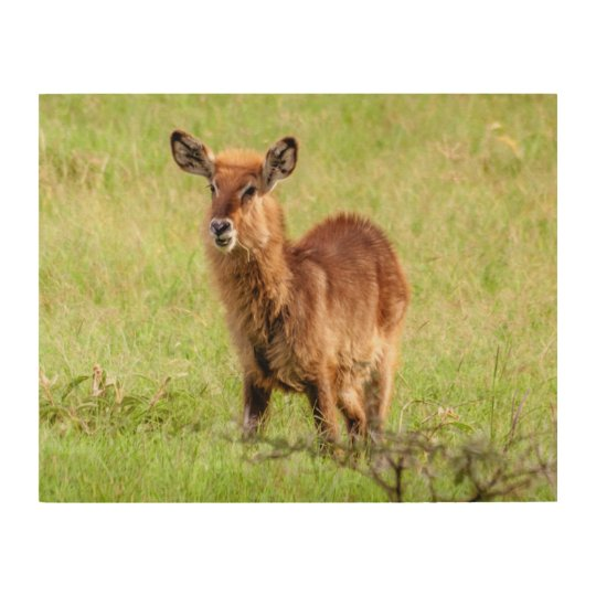 Getty Images   Young Brown Antelope Waterbuck Wood Print