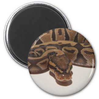 Ghost Ball Python Magnet