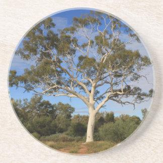 Ghost gum tree, Outback Australia Coaster