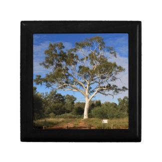 Ghost gum tree, Outback Australia Gift Box