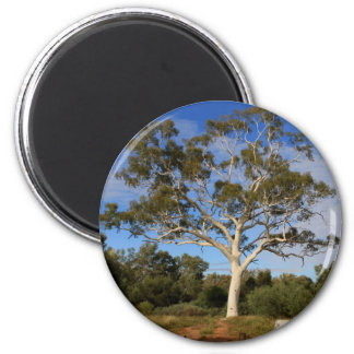 Ghost gum tree, Outback Australia Magnet