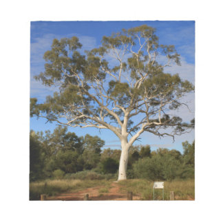 Ghost gum tree, Outback Australia Notepad