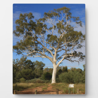 Ghost gum tree, Outback Australia Plaque