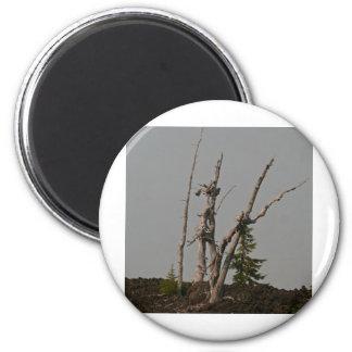 Ghost Trees, McKenzie Pass, Oregon 6 Cm Round Magnet