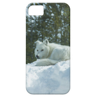 Ghost Wolf iPhone 5 Cover