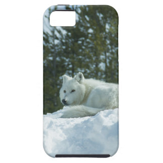 Ghost Wolf Tough iPhone 5 Case