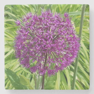 Giant Allium Flower Coaster
