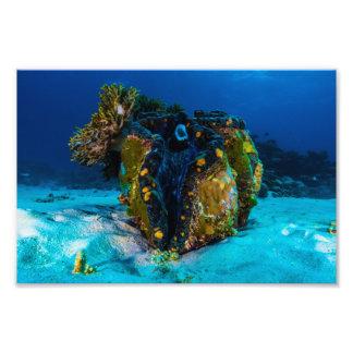 Giant Clam Photo Print