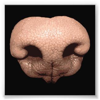 Giant Dog Nose Photo