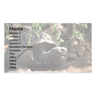 Giant Dome-Shaped Tortoise Closeup Business Card Templates