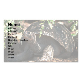 Giant Dome-Shaped Tortoise Closeup Business Cards
