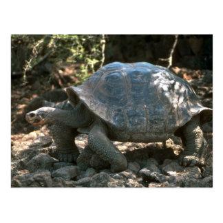 Giant Dome-Shaped Tortoise Walking Postcard