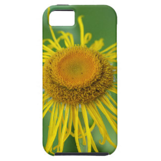 Giant Fleabane  (Inula magnifica) Case For The iPhone 5
