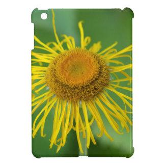 Giant Fleabane  (Inula magnifica) iPad Mini Cases